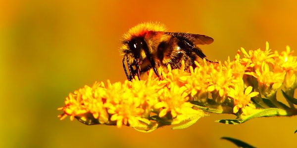 12 Facts I Bet You Didn't Know About Bees!